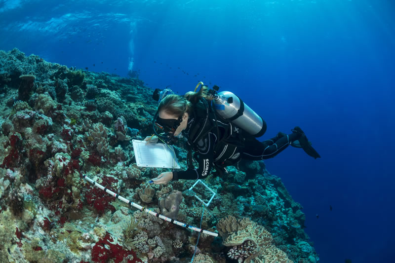 Grace Frank, a scientist with the Living Oceans Foundation, surveys corals at the outer reef edge of the Great Barrier Reef.