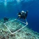 Kristin Stolberg (front) and Bar Ayalon (back),  surveying fish and coral species within their quadrat on the Great Barrier Reef. Quadrats are used in ecology to isolate a standard unit of area in order to study the distribution of species over a large area - in this case an entire reef.