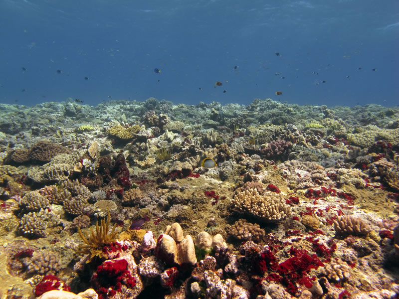 Reef crest with smaller acroporid corals and splashes of bright red from an encrusting sponge.