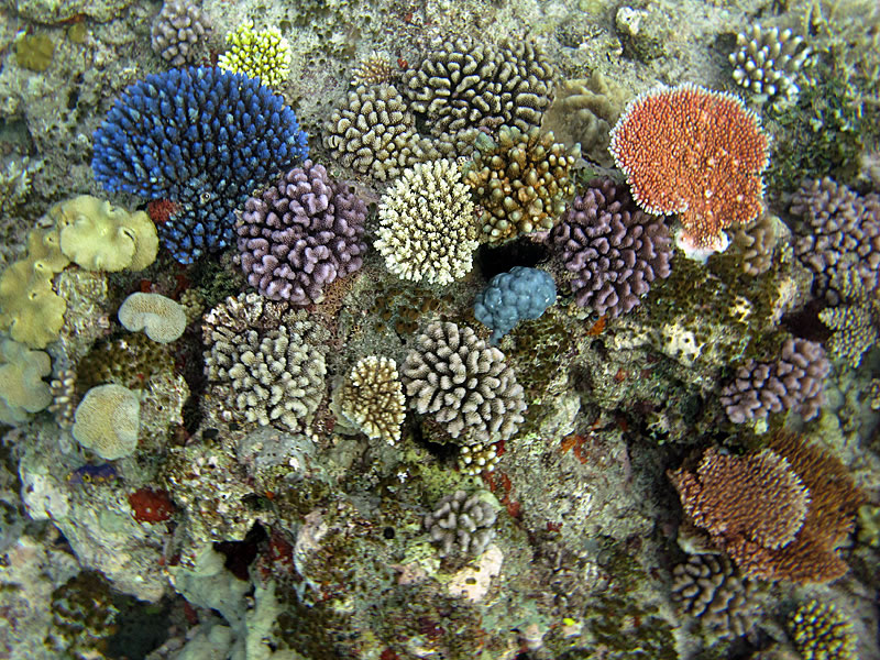 ""\""""Artist's pallete"""" of colorful corals.""800|600|?|en|2|7a986e2276b2d7a5a38becf2e3c7c77a|False|UNLIKELY|0.3269612789154053