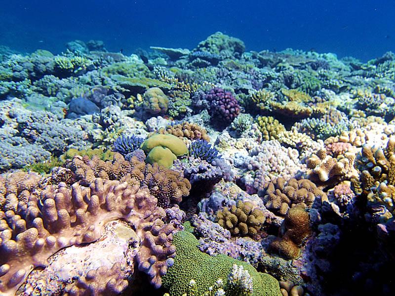 Beautiful Jewel Reef.
