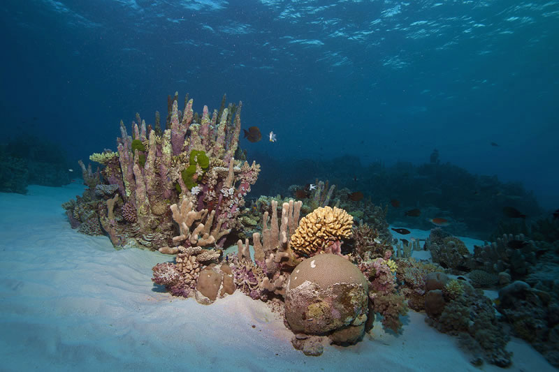 Cluster of corals in the shallows including upright pillars of Isopora.