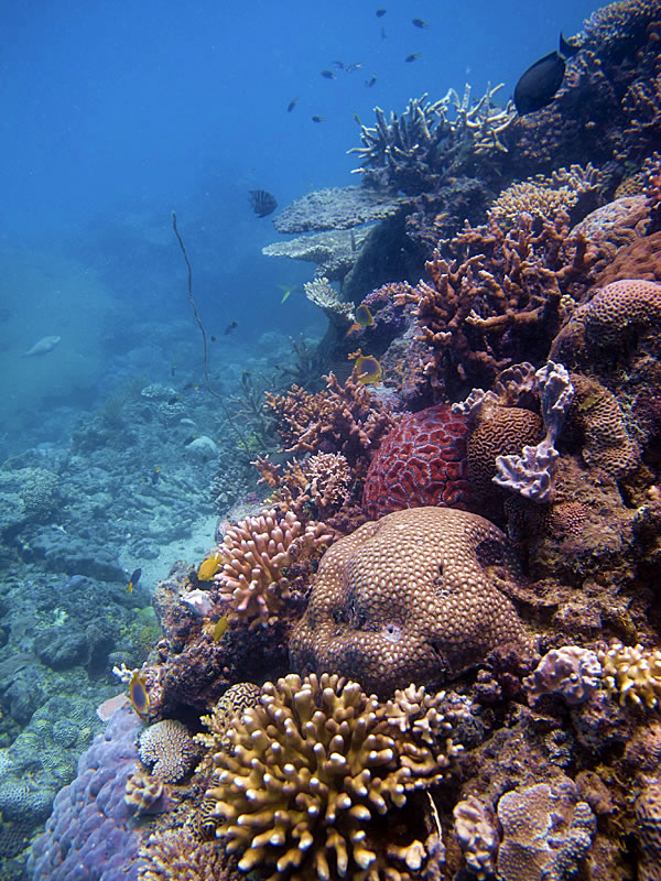 Colorful reef scene along a sloping drop-off.
