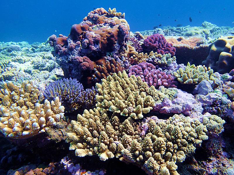 Coral variety at Jewel Reef.