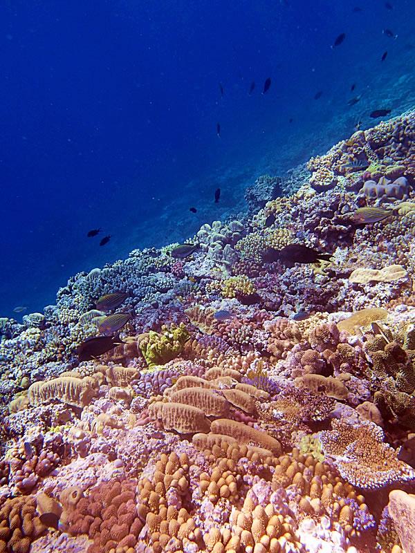 Hicks Reef.