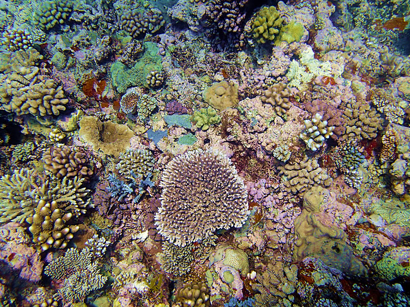 High coral diversity.