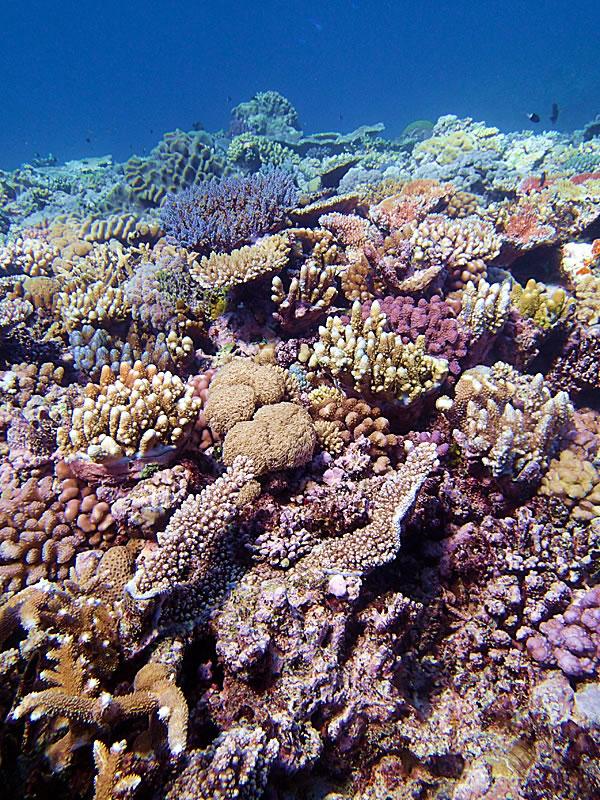 Jewel Reef at 6-7 meters.