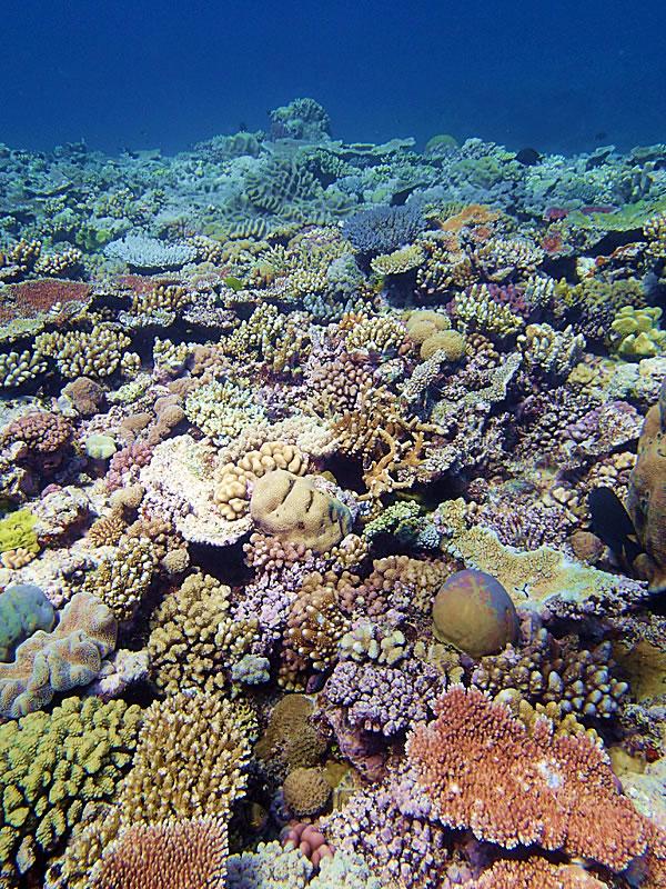 Jewel Reef