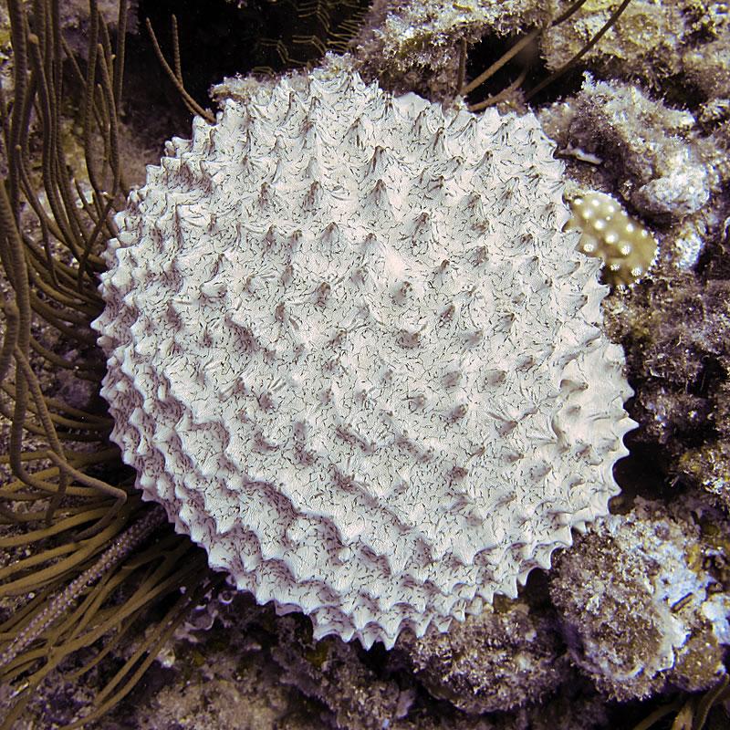 Lumpy white sponge
