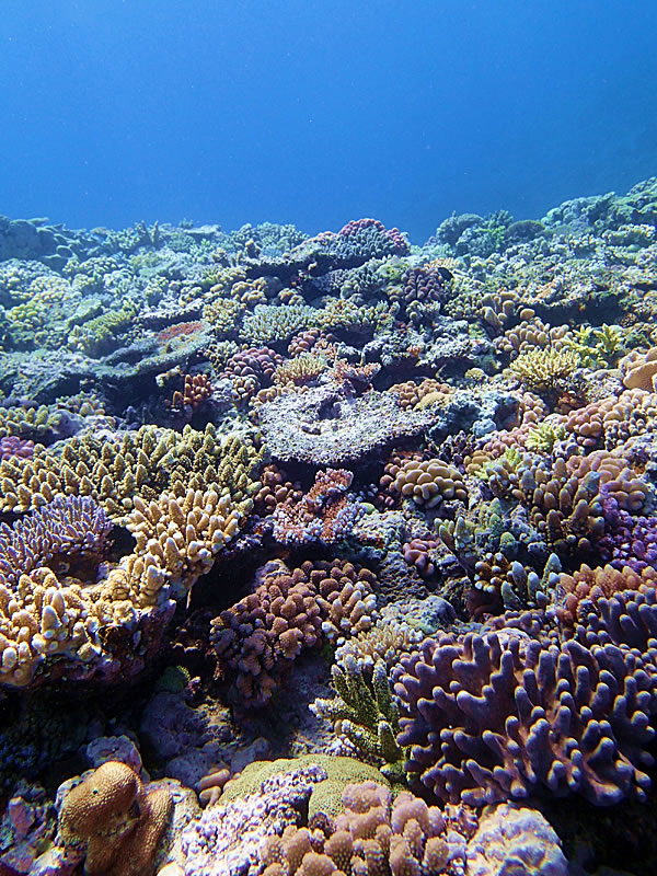 Reef scene of Jewel Reef.