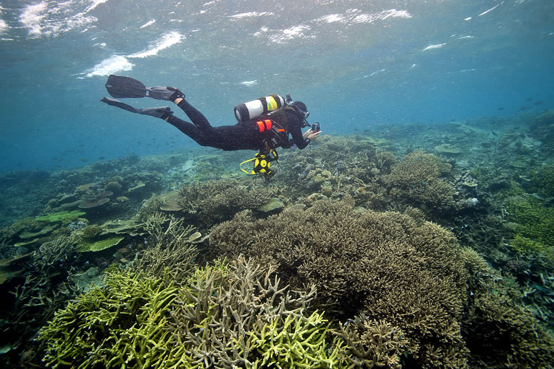 Anderson Mayfield photographing the abundance of corals in the shallows.
