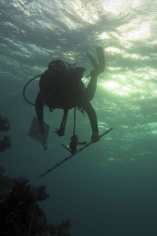 Abby Cannon surveying corals.