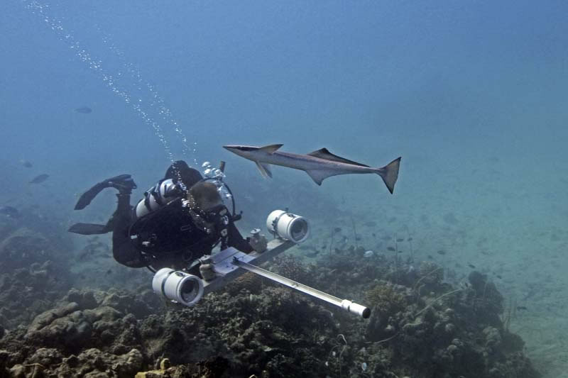 Brett Taylor with stereo camera searches for sharks while a remora looks for a place to attach.