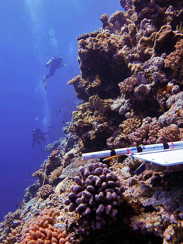 Surveying coral reefs along a steep wall.