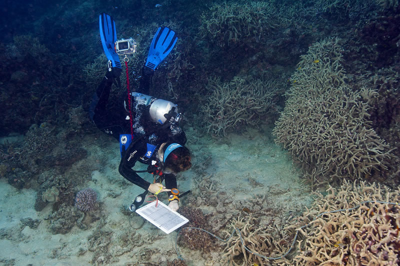 Surveyor Samantha Clements peforming a benthic transect.