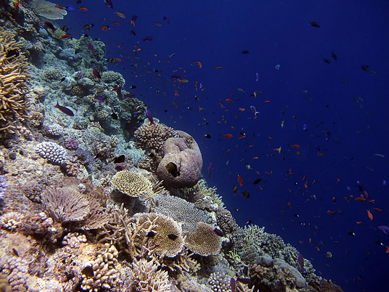 Looking down a steep drop-off with a swarm of damselfish, fusiliers and anthias.
