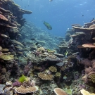 Scenic landscape of a healthy reef.