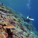 Sloping dropoff with a healthy amount of coral cover.