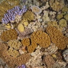 Soft Corals of Ribbon Reefs