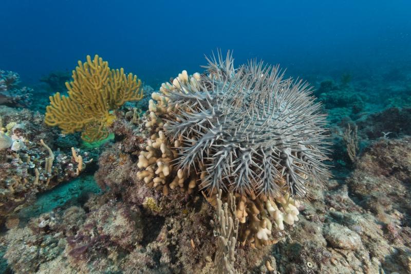 Reef: Lark Reef