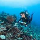 Dr. Andrew Bruckner measuring coral.