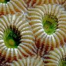 Macro Coral