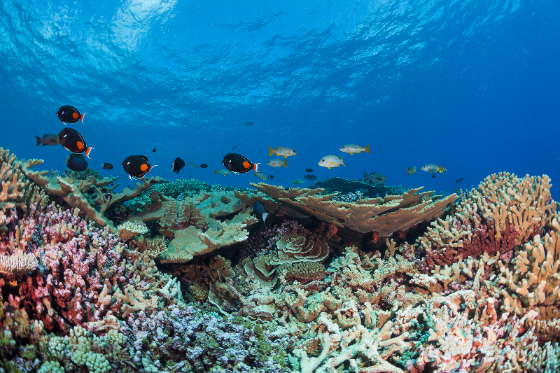 Healthy reef system with a variety of tropical fish and corals.