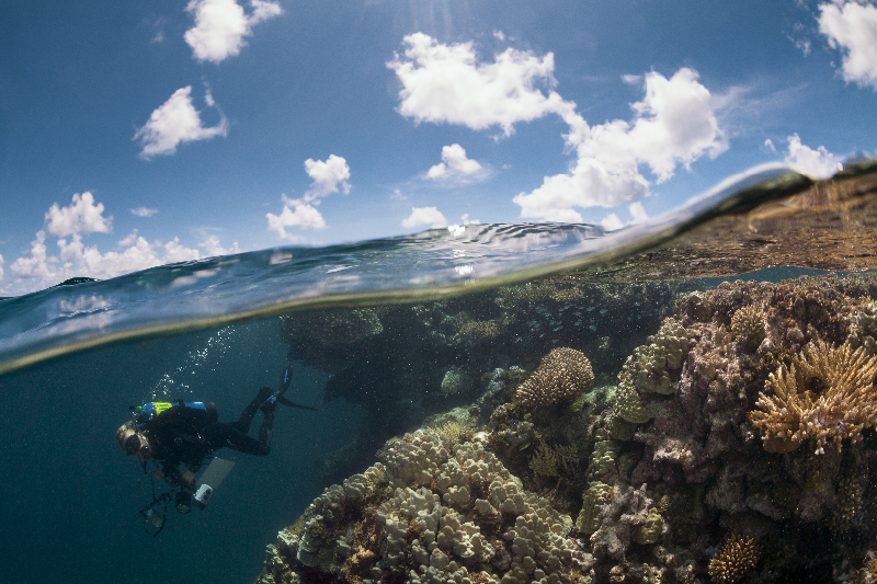 Over/under shot of shallow coral reef system.