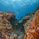 Megan Cook diving at heathy reef system.