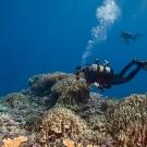 Joao Monteiro surveying reef system.
