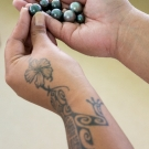 Beautiful black pearls of the Gambier Islands held by a pearl farm technician.  Showing traditional tattooing on arm.