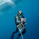 Scientist, Marie Kospartov, specialist on ocean corals surfacing with all her equipment.