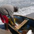 A fisherman in Honduras unloads his catch.