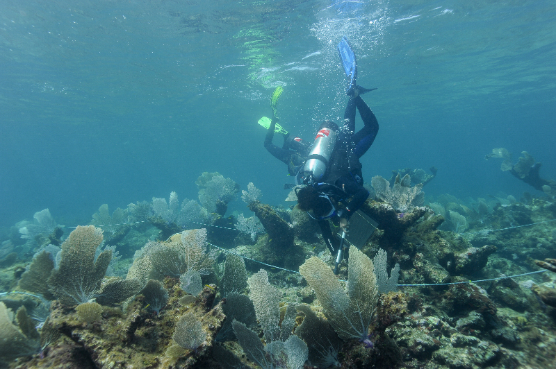 Agnessa Lundy works on a transect.
