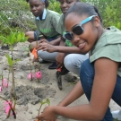 Holland High School Biology students plant mangrove seedlings that they have been growing for the past 8 months.