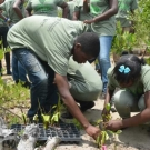 Students at Holland High School plant their mangroves carfully in the ground.