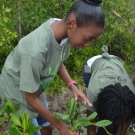 Students from William Knibb High School find an open spot to plant their mangrove propagules. These students know that the propagules need space to grow.