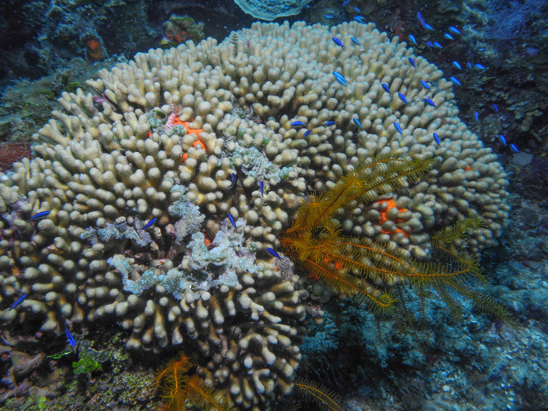 What Natural Resources Does A Coral Reef Provide