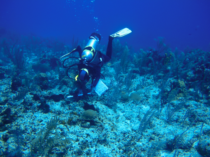 A member of the Science Team measures Finger Coral