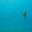 Staghorn Coral nursery.