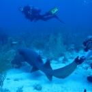 The Science Team encounters a Nurse Shark.