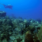A science team member surveys this reef.