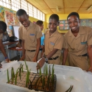 Students carefully plant mangrove propagules they collected in the forest.