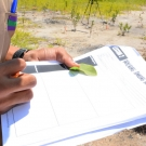 While in the mangrove forest, students fill out a worksheet on how to identify the different kinds of mangroves.