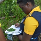 10th grade Biology student from Marcus Garvey Technical School draws and labels the leaves of the three different mangrove trees in Jamaica.