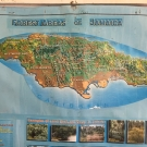 Often in the classrooms in Jamaica, there are educational posters hung around the room. This poster is of a map of the forests in Jamaica, including mangroves.