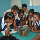 Holland High School students are shocked that some of the organisms, like sea cucumbers, can live near the mangroves.