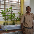 William Knibb student stands next to the mangrove propagules to show the scale.