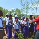 UWI Discovery Bay partner, Camilo Trench, teaching students from William Knibb High School about black mangroves.