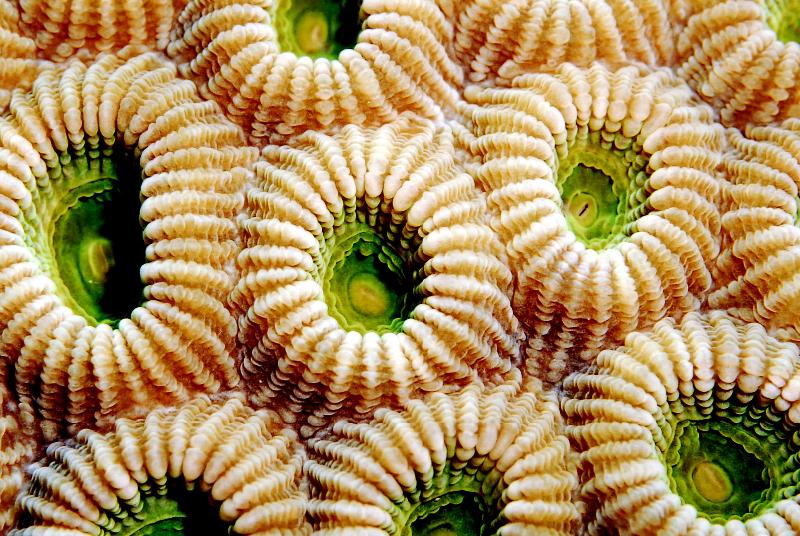 Macro Coral Ocean Images Living Oceans Foundationliving